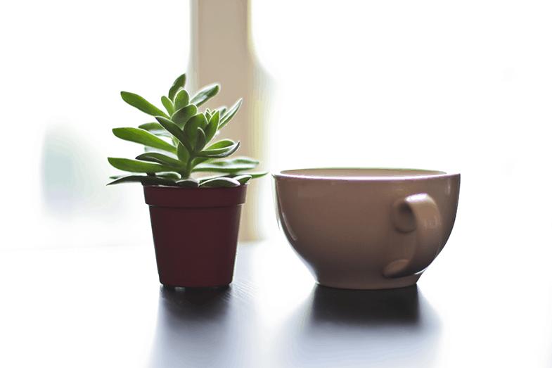 {D.I.Y.} Plantez des tasses !
