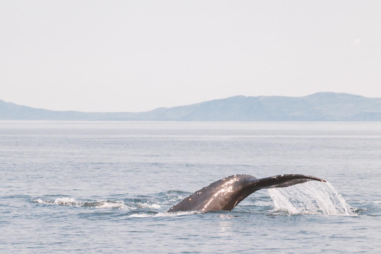 🍁 Carnet de bord Canadien #4 – Fjord du Saguenay & baleines